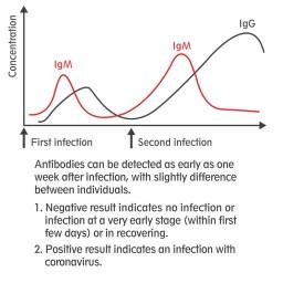 De ontwikkeling van de antistoffen